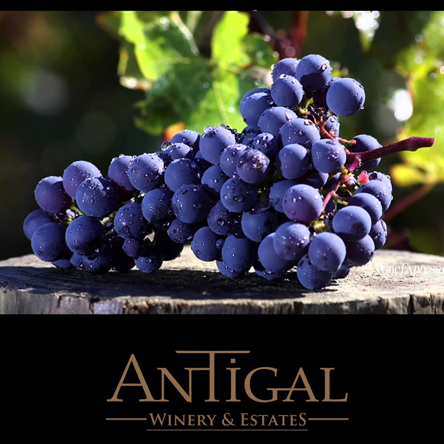 Cabernet Sauvignon Antigal