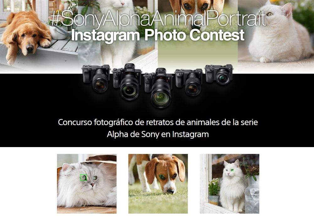 Concurso Sony Alpha